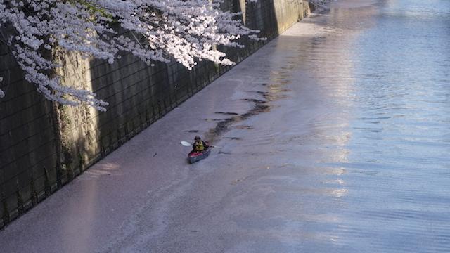 満員御礼【お花見】お花見名所!  目黒川をカヌーで巡る ツアー