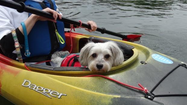 2017.5.7 dog canoe104