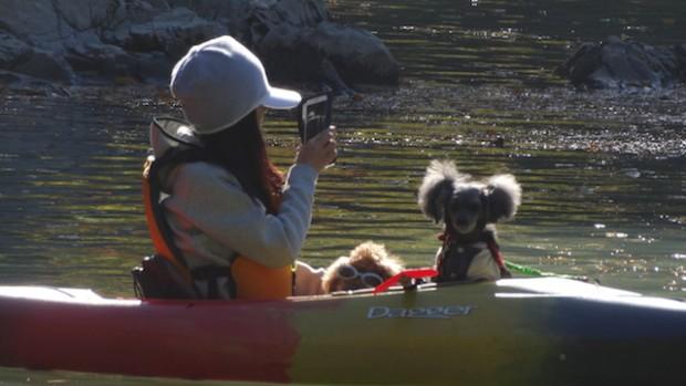 2017.11.12 dog canoe73