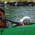 2017.11.3 dog canoe43