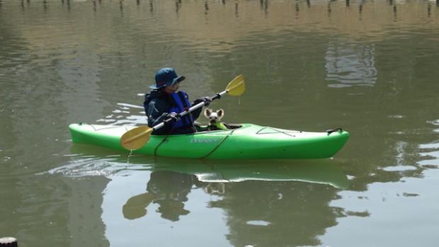2018.3.11dog canoe18
